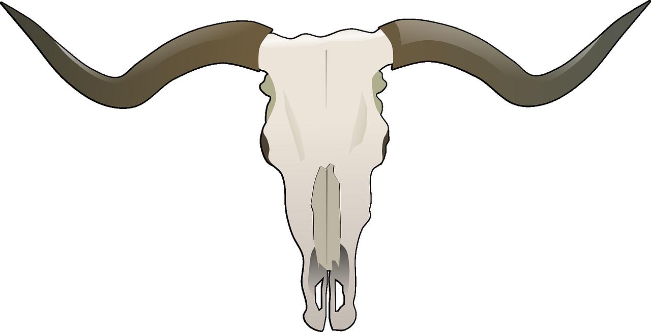 Cráneo de vacuno