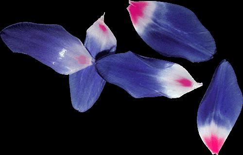 Flores azules y rosas