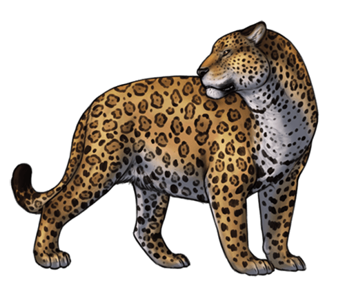 Jaguar depredador