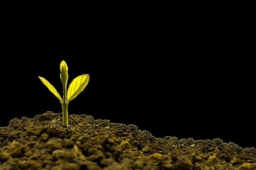 Planta germinada – negocio