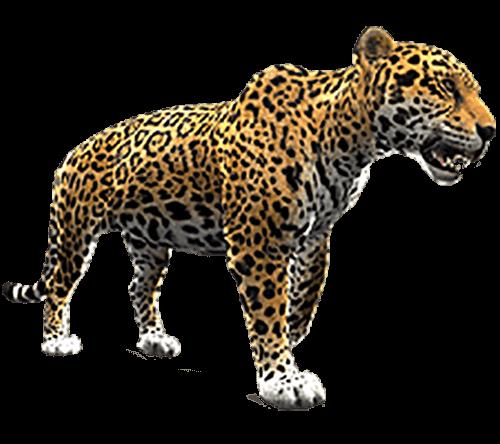 Jaguar con sed