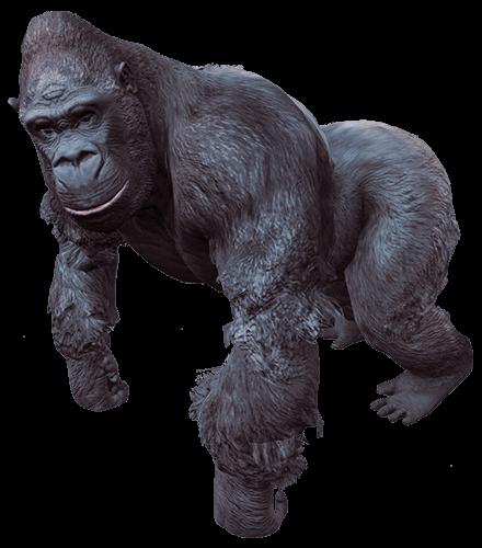 Gorila en 4 patas