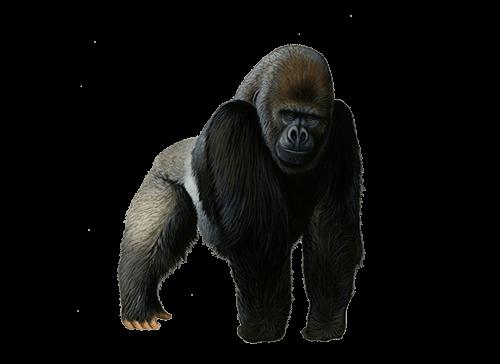 Gorila parado en 4 patas