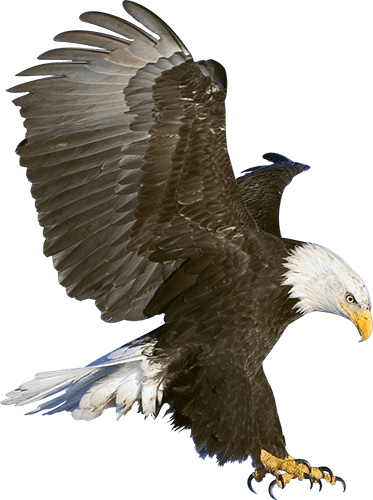 Águila Eagle aterrizando vuelo