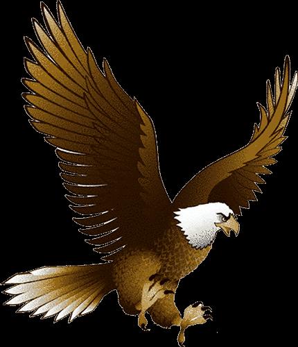 Águila Eagle dos colores pintura