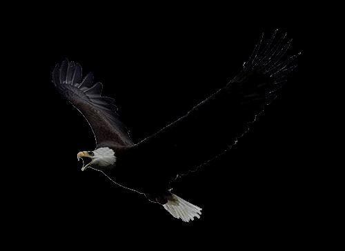 Águila Eagle volando hacia la izquierda