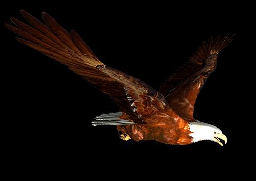 Águila Eagle vuela al sur