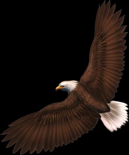 Águila Eagle vuela y observa