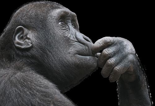 Mono con la mano en la boca