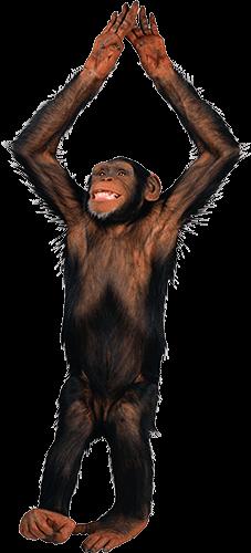 Mono haciendo Yoga
