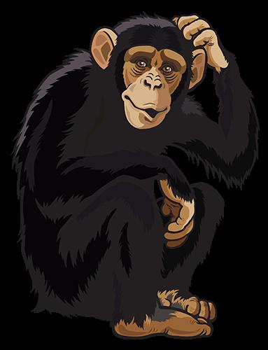 Mono rascandose la cabeza
